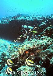 Diver enjoying beautiful reef. by Mike Clark