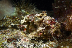A frogfish.....Find it. by Miguel Cortés