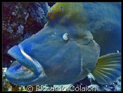 A big Napo at Yolanda Reef - Ras Mohammed Sharm el Sheikh... by Riccardo Colaiori