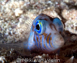 Toby taken on a night dive at Ras Umm Sid on E300. by Nikki Van Veelen