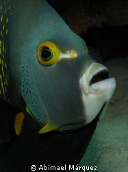 French Angelfish, Something Special, Bonaire 2008 by Abimael Márquez