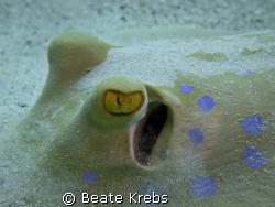 Close Look, ElQuseir Housereef / Egypt , Canon S70 , Macr... by Beate Krebs
