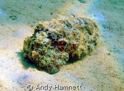 Cuttlefish in the sand.  by Andy Hamnett