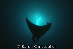 Manta ray silhouette. by Karen Christopher
