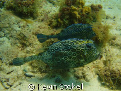 Found these two yesterday, at Porto Marie, on the south c... by Kevin Stokell