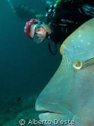 Napoleon Fish and scubagirl by Alberto D'este