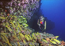 """the """"blue caves"""" at Maalhos Thila in Ari atoll, Maldives by Geoff Spiby"""