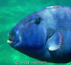 Close up blue trigger by Andy Hamnett