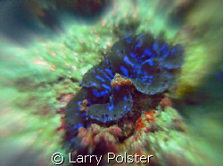 Giant clam on the move, Nikon D-70 twin Ikelite D-125 str... by Larry Polster