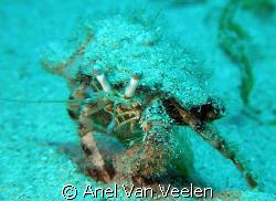 Hermit crab taken in Ras Mohamed with SP350. by Anel Van Veelen