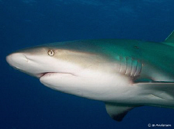 This photo was taken at Shark Wall, while diving with Stu... by Steven Anderson