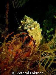 Hermid Crab...smile,you in candid camera!!! @ Blue Water ... by Zafarol Lokman