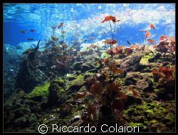 Flora of Mexican Cenotes - Mexico - Canon Digital Ixus 70... by Riccardo Colaiori