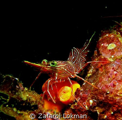 Ahh..shrimp again!! by Zafarol Lokman
