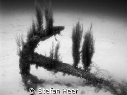 This is the anchor from the wreck Rosie! (ca. 3 meter long)  by Stefan Heer