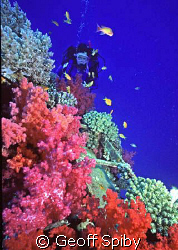 soft corals on the Ghiannis D Nikonos 4 with 15mm lens ... by Geoff Spiby