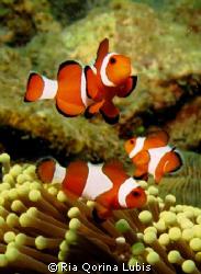 Nemo Family by Ria Qorina Lubis