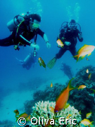 Divers and fishs by Oliva Eric
