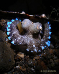 Peek-A-Boo!  He was inside this shell when I saw him.  Th... by Larry Medenilla