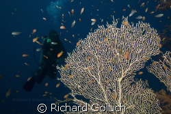 Dive Master waiting on the group.Ras Muhammad-Red Sea by Richard Goluch