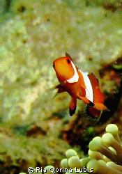 Nemo by Ria Qorina Lubis