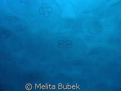 cloud of jellyfishes / no strobe / Fiesa, Slovenia/ april 08 by Melita Bubek