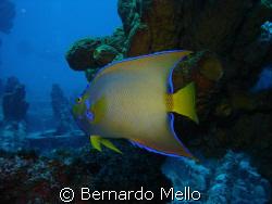 Very hard to catch!!! by Bernardo Mello