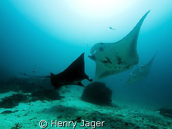 """""""Mantas""""  Raja Ampat, West Papua (Olympus E330, 1/125, f6... by Henry Jager"""