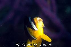 Good dive site in Oman. by Alberto D'este