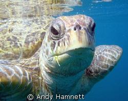 Morla, my favourite turtle by Andy Hamnett