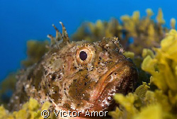 A serious fish by Victor Amor