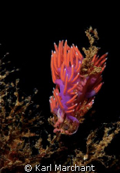 WHO SAYS THERE IS NO COLOUR IN THE MED???!!!