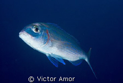 Fish portrait by Victor Amor