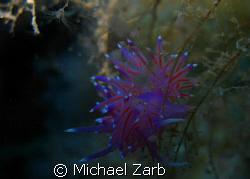 Nudi on new p29 wreck - Cirkewwa, Malta. -2, flash, and m... by Michael Zarb