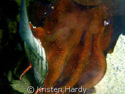 fish dinner.... by Kristen Hardy