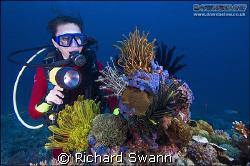 Coral Head Lankayan by Richard Swann
