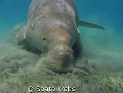 Ready for landing , Dugong , Canon S70  by Beate Krebs