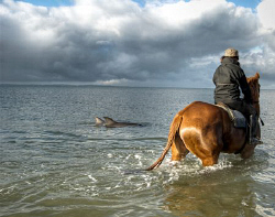 An incredible mammal relationship. These dolphins came in... by Cal Mero