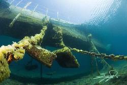 Under the platform by Nicholas Samaras