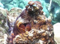 ...octopus by Jozef Butala