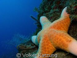 Starfish by Volker Katzung