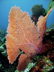 This photo was taken at Mikes Reef in Nassau. This shallo... by Steven Anderson