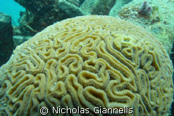Ft Lauderdale. 27 feet deep. by Nicholas Giannelis