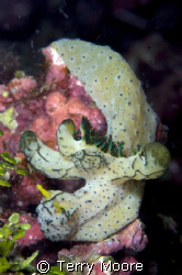 A very unusual Nudibranch found in one of the fiord's at ... by Terry Moore