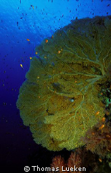 found in the Red Sea, F100 by Thomas Lueken