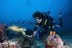 Turtle & Diver by Nicholas Samaras