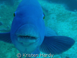 High Five?!!... curious Groper at Magic Point. Sydney. by Kristen Hardy