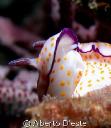 Nudibranchio by Alberto D'este
