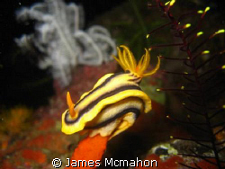 Nudi on a pedestal.