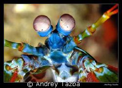 Alien. Anilao (Batangas), Philippines. by Andrey Tazba